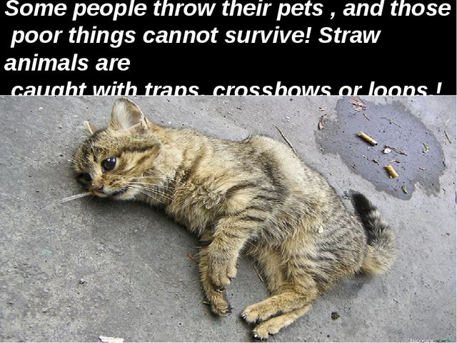 Some people throw their pets , and those poor things cannot survive! Straw an...