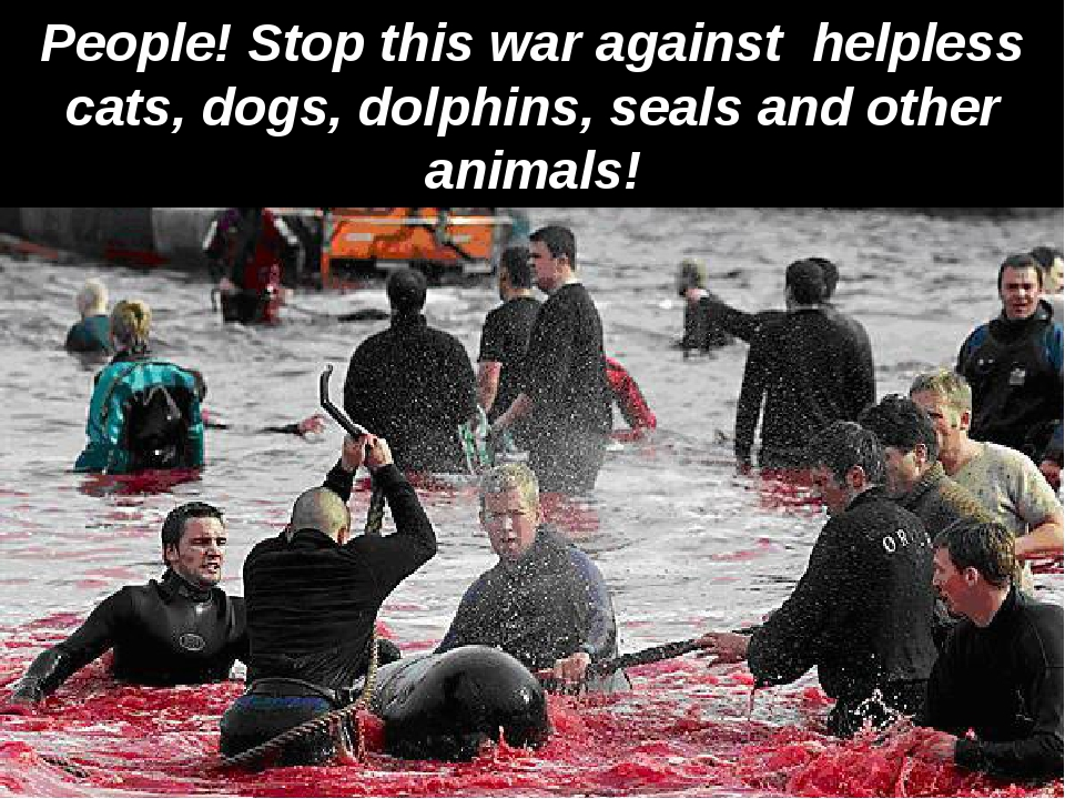 People! Stop this war against helpless cats, dogs, dolphins, seals and other...