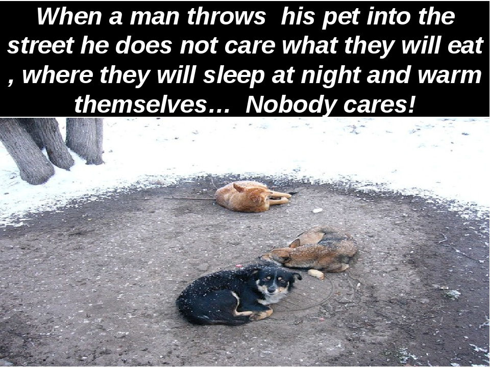 When a man throws his pet into the street he does not care what they will eat...