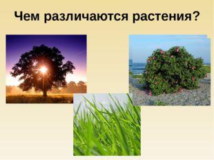 Чем различаются растения?