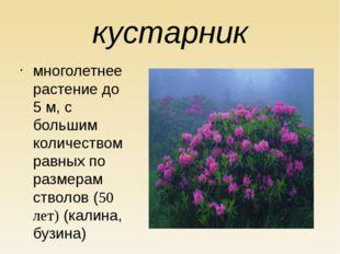 кустарник многолетнее растение до 5 м, с большим количеством равных по размер