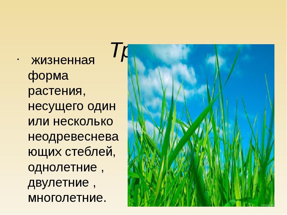 Травы жизненная форма растения, несущего один или несколько неодревесневающи...