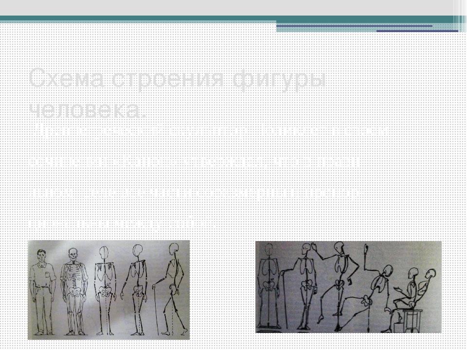 Схема строения фигуры человека. Древнегреческий скульптор Поликлет в своем со...