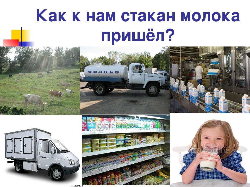 Как к нам стакан молока пришёл?