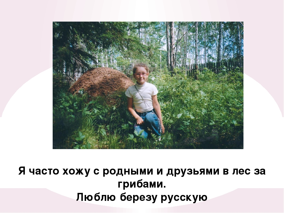 Я часто хожу с родными и друзьями в лес за грибами. Люблю березу русскую