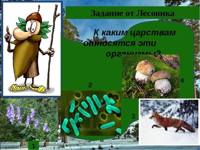 1 Задание от Лесовика К каким царствам относятся эти организмы? 1 2 3 4