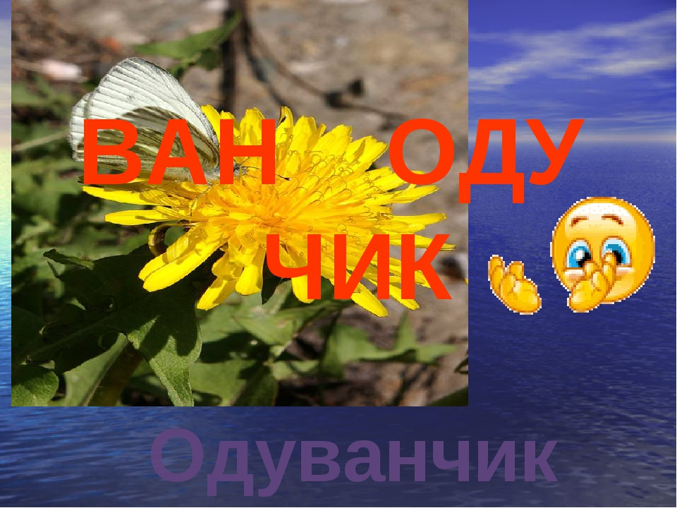 ВАН ОДУ ЧИК Одуванчик
