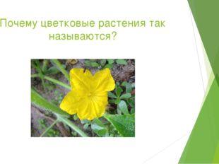 Почему цветковые растения так называются?