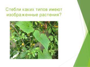 Стебли каких типов имеют изображенные растения?