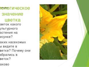Биологическое значение цветка Цветок какого культурного растения на рисунке?
