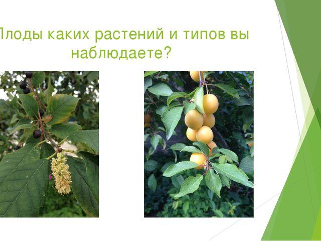 Плоды каких растений и типов вы наблюдаете?