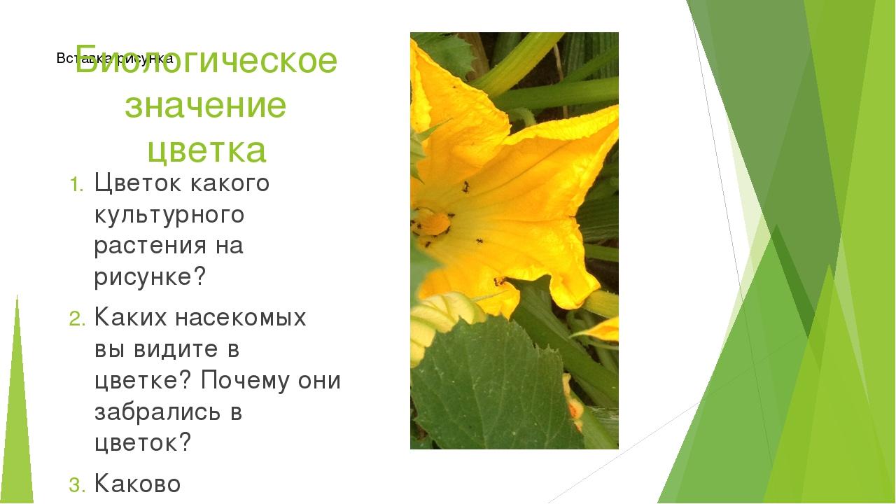 Биологическое значение цветка Цветок какого культурного растения на рисунке?...