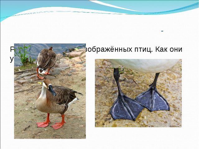 -  Рассмотрите лапы изображённых птиц. Как они устроены?