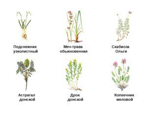 Подснежник узколистный Меч-трава обыкновенная Скабиоза Ольги Астрагал донской