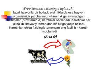 Provitaminni vitaminga aylanishi faqat hayvonlarda bo'ladi, o'simliklarda esa