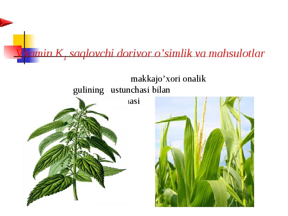 Vitamin K1 saqlovchi dorivor o'simlik va mahsulotlar  makkajo'xori...