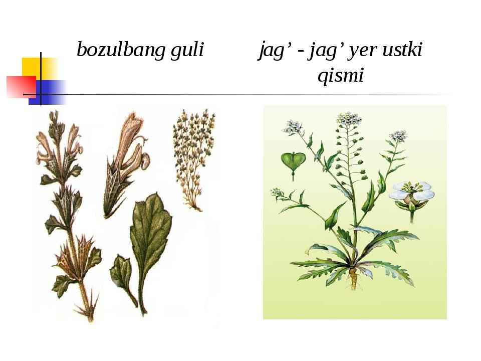 bozulbang guli jag' - jag' yеr ustki qismi