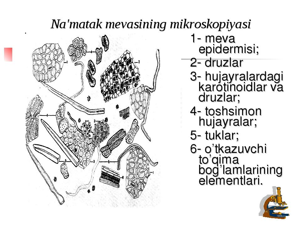 Na'matak mevasining mikroskopiyasi 1- meva epidermisi; 2- druzlar 3- hujayral...
