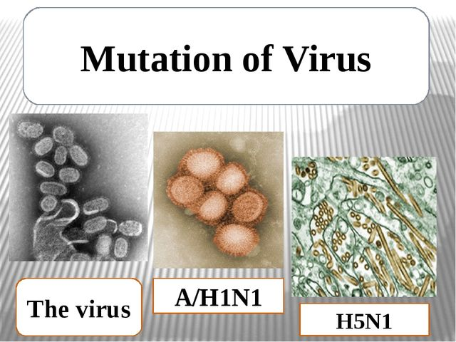 Mutation of Virus A/H1N1 H5N1 The virus