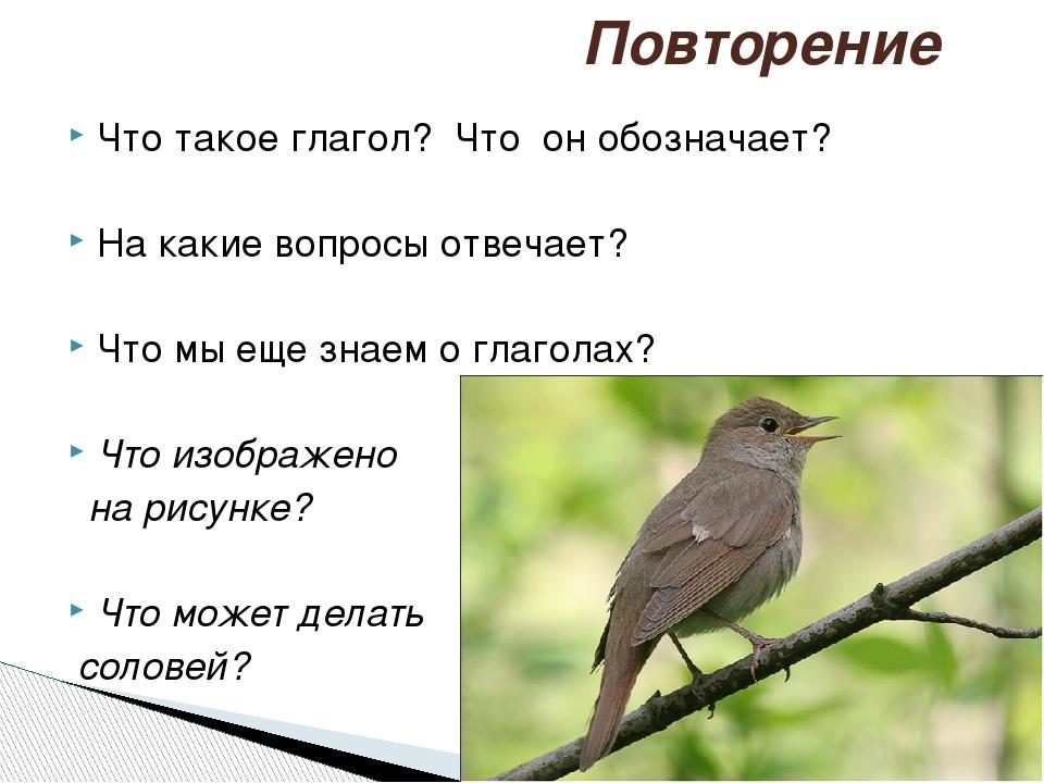 Что такое глагол? Что он обозначает? На какие вопросы отвечает? Что мы еще з...