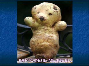 КАРТОФЕЛЬ-МЕДВЕДЬ