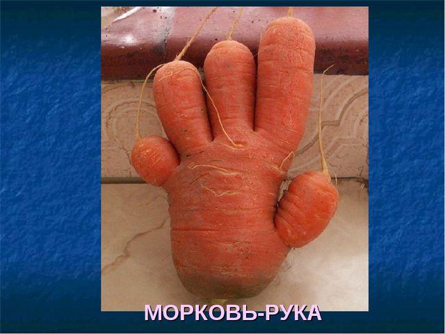 МОРКОВЬ-РУКА