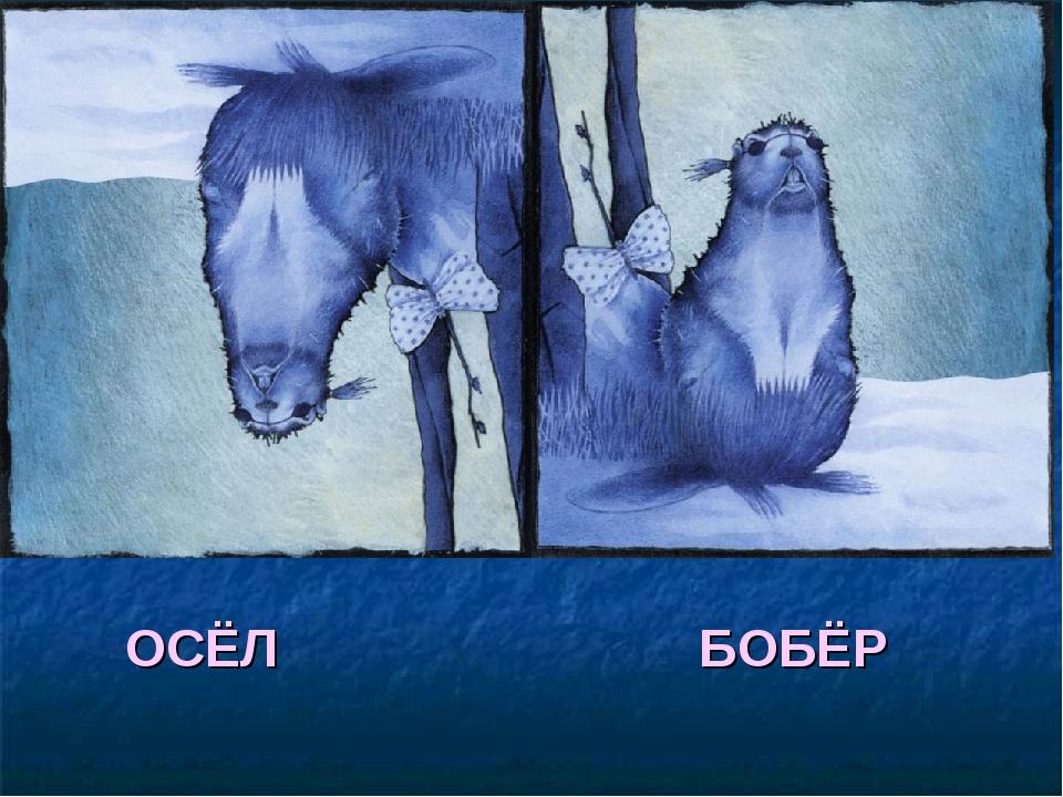БОБЁР ОСЁЛ
