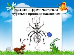 Укажите цифрами части тела муравья и признаки насекомых