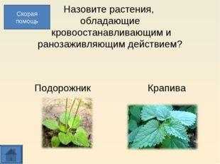 Назовите растения, обладающие кровоостанавливающим и ранозаживляющим действи