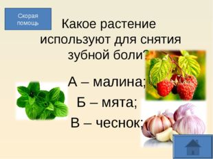 Какое растение используют для снятия зубной боли? А – малина; Б – мята; В –