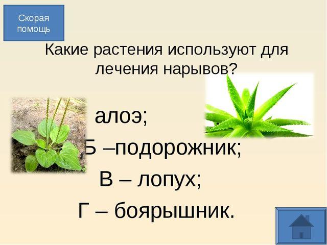 Какие растения используют для лечения нарывов? А – алоэ; Б –подорожник; В –...