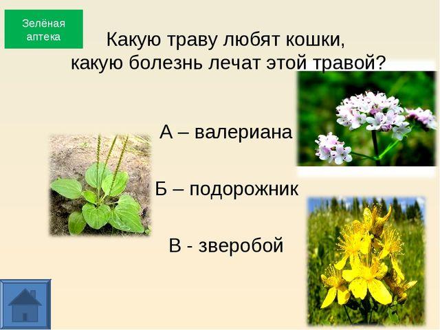 Какую траву любят кошки, какую болезнь лечат этой травой? А – валериана Б – п...