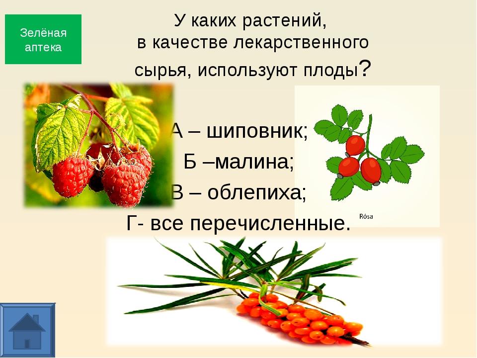У каких растений, в качестве лекарственного сырья, используют плоды? А – шипо...