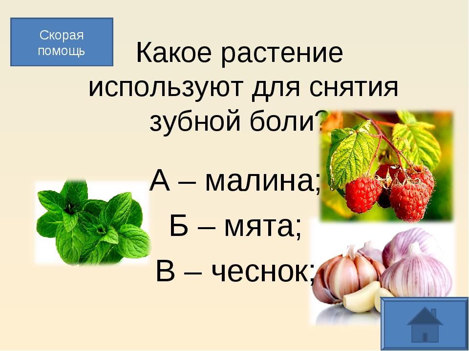 Какое растение используют для снятия зубной боли? А – малина; Б – мята; В –...