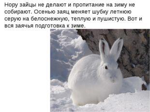 Нору зайцы не делают и пропитание на зиму не собирают. Осенью заяц меняет шуб