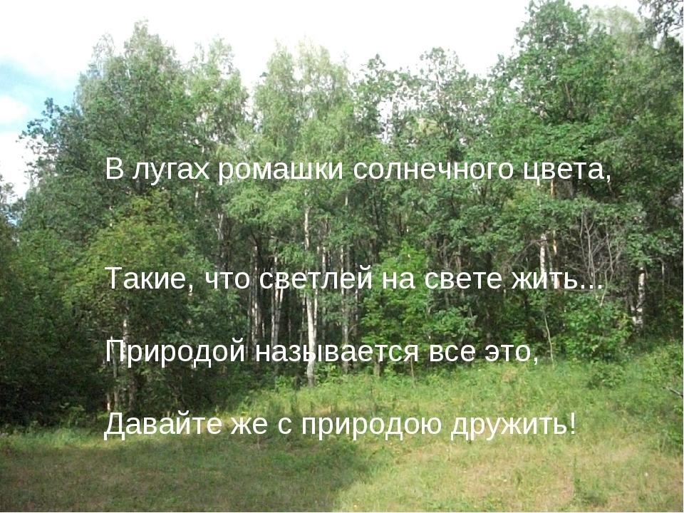 В лугах ромашки солнечного цвета, Такие, что светлей на свете жить... Природ...