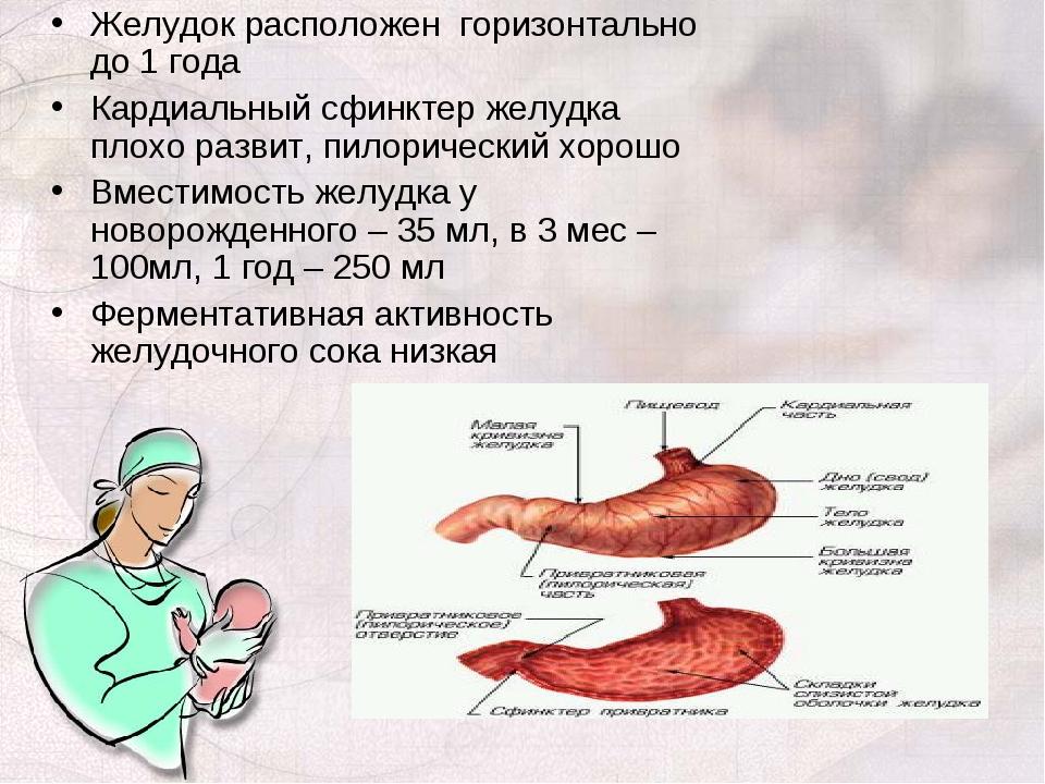 Желудок расположен горизонтально до 1 года Кардиальный сфинктер желудка плохо...