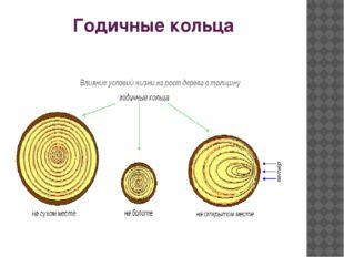 Годичные кольца