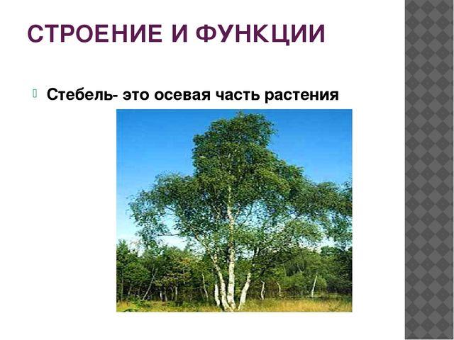 СТРОЕНИЕ И ФУНКЦИИ Стебель- это осевая часть растения