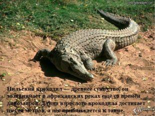 Нильский крокодил — древнее существо, он хозяйничает в африканских реках ещё