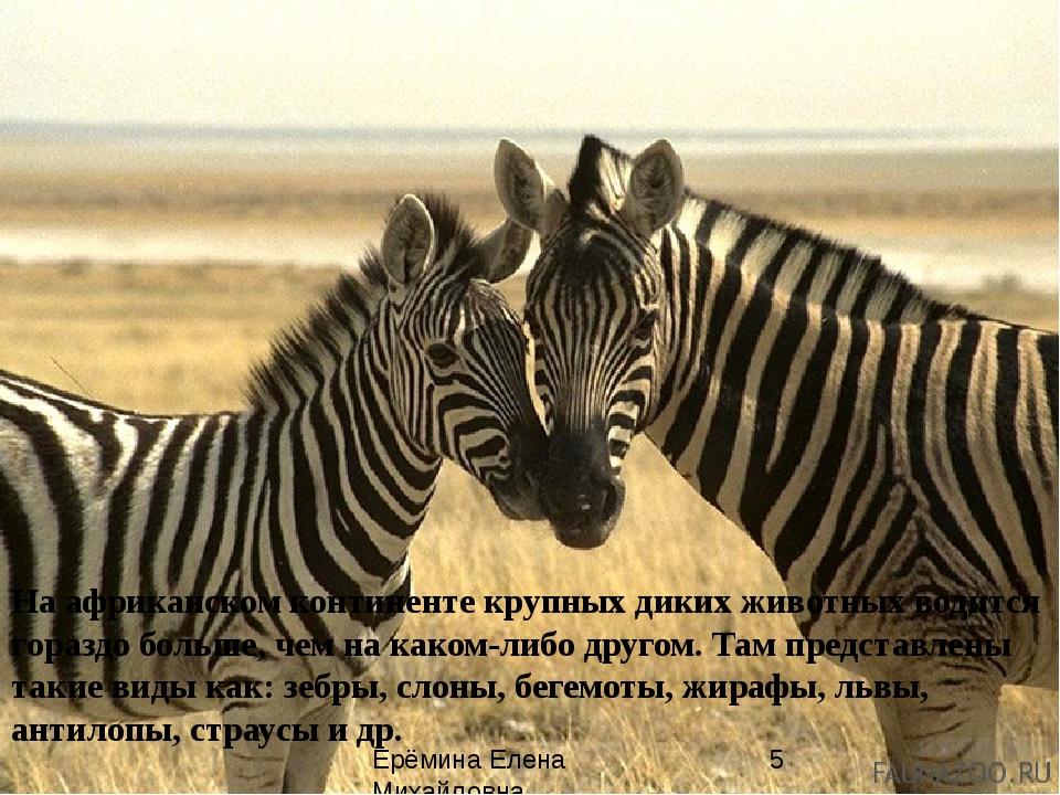 На африканском континенте крупных диких животных водится гораздо больше, чем...