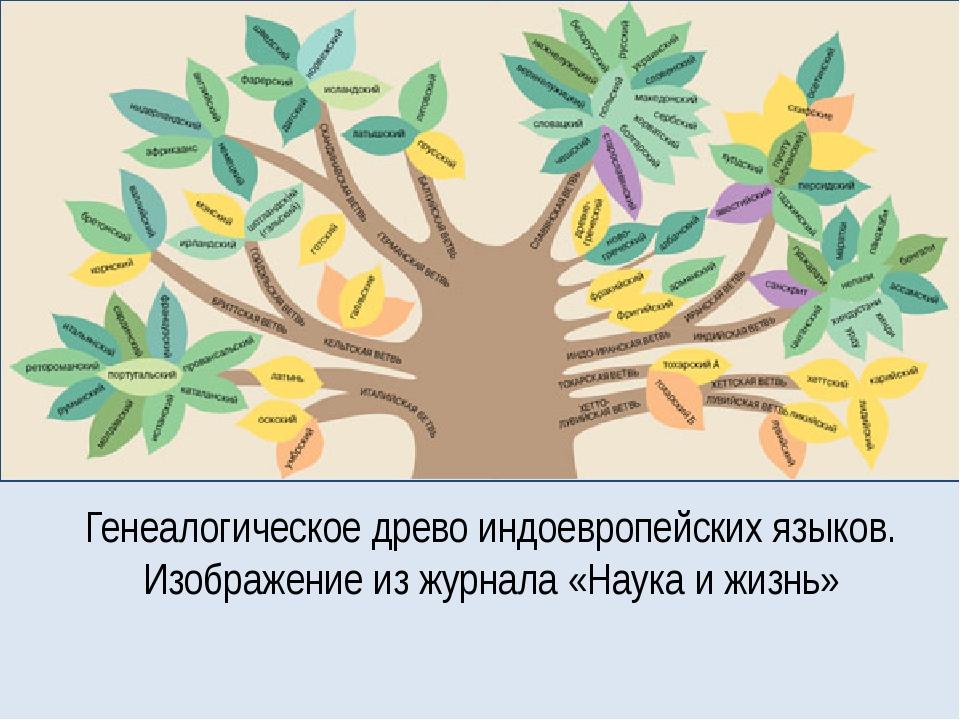 Генеалогическое древо индоевропейских языков. Изображение из журнала «Наука и...