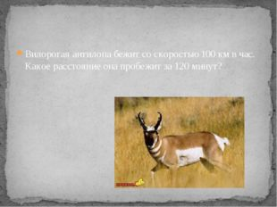 Вилорогая антилопа бежит со скоростью 100 км в час. Какое расстояние она проб