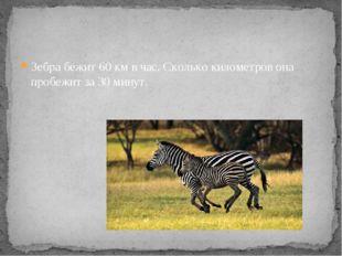 Зебра бежит 60 км в час. Сколько километров она пробежит за 30 минут.