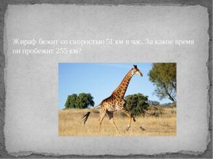 Жираф бежит со скоростью 51 км в час. За какое время он пробежит 255 км?
