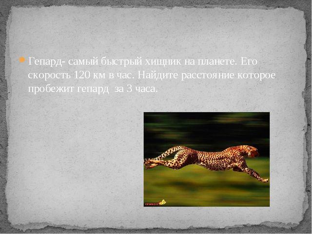 Гепард- самый быстрый хищник на планете. Его скорость 120 км в час. Найдите р...