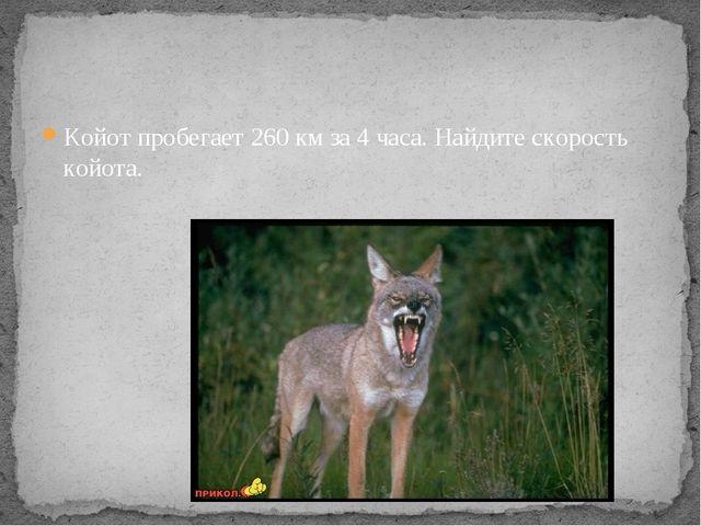 Койот пробегает 260 км за 4 часа. Найдите скорость койота.