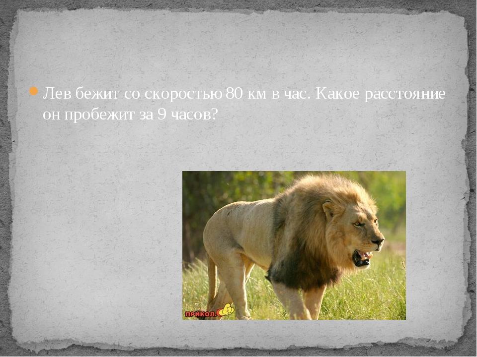 Лев бежит со скоростью 80 км в час. Какое расстояние он пробежит за 9 часов?