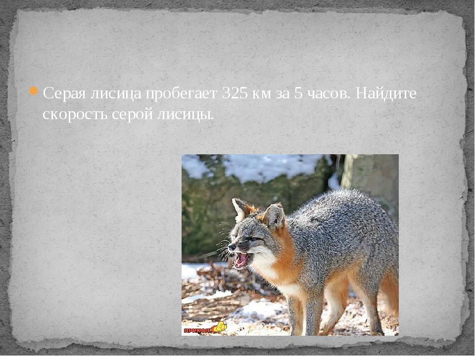 Серая лисица пробегает 325 км за 5 часов. Найдите скорость серой лисицы.
