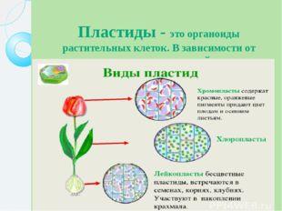 Пластиды - это органоиды растительных клеток. В зависимости от окраски пласти